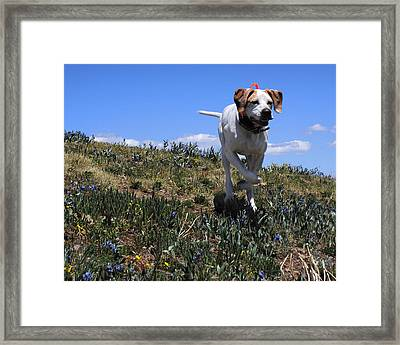 The Joy Of The Hunt Framed Print by Jessica Tookey