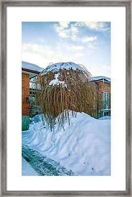 The Joy Of Winter Framed Print