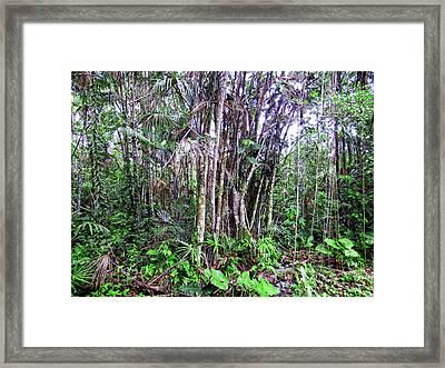 The Jungle Framed Print by Kurt Van Wagner