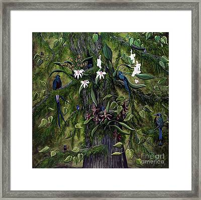The Jungle Of Guatemala Framed Print