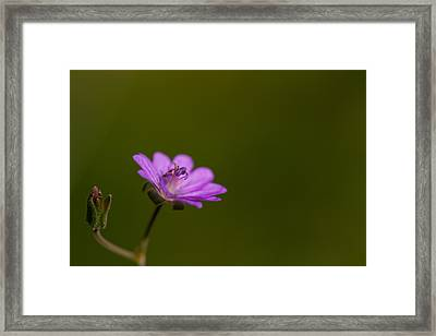 The Junior Is On The Way  Framed Print by Andreas Levi