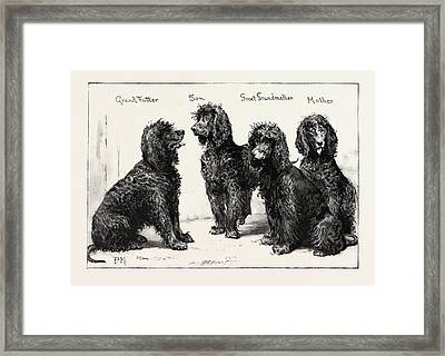 The Kennel Club Show At The Agricultural Hall A Successful Framed Print
