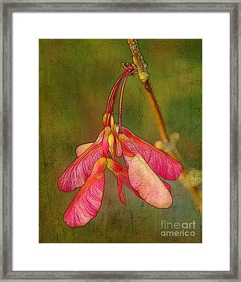 The Keys To Springtime Framed Print
