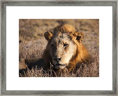 The King Framed Print by Craig Brown