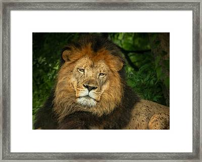 Framed Print featuring the photograph The King Rests by Linda Karlin