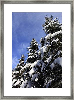The Kings Framed Print by Maude Demers