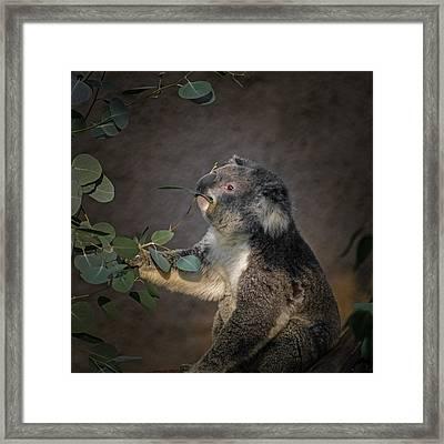The Koala Framed Print
