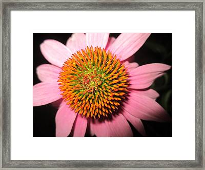 The Koosh Ball Framed Print by Mike Podhorzer