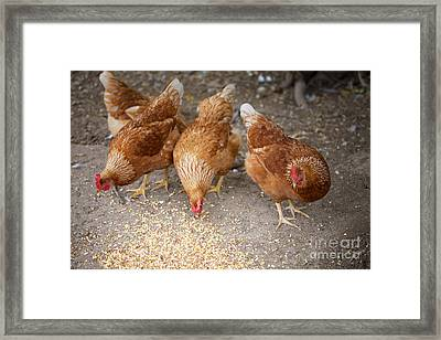 Framed Print featuring the photograph The Ladies by Erika Weber