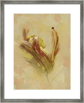 The Lady And The Parrot Tulip Framed Print by Diane Schuster