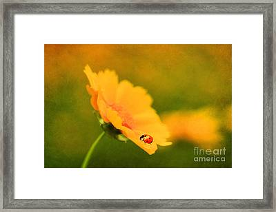 The Lady Bug Framed Print by Darren Fisher
