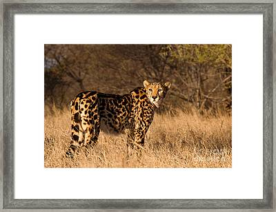 The Lady's A King Framed Print
