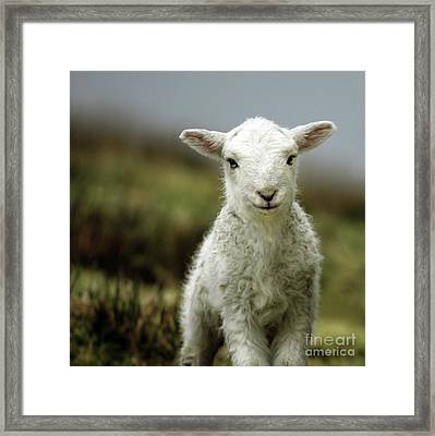 The Lamb Framed Print