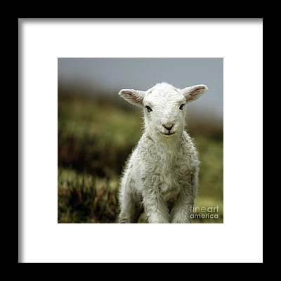 Wales Framed Prints
