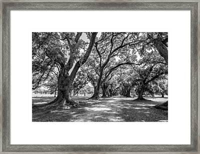 The Lane Bw Framed Print by Steve Harrington