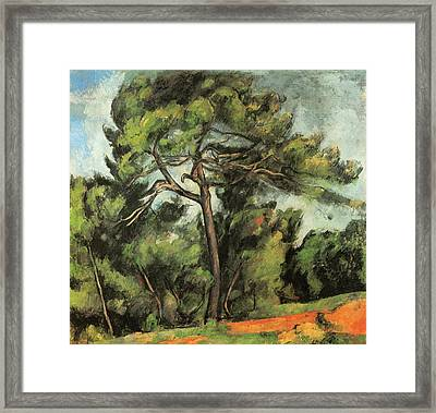 The Large Pine Framed Print by Paul Cezanne