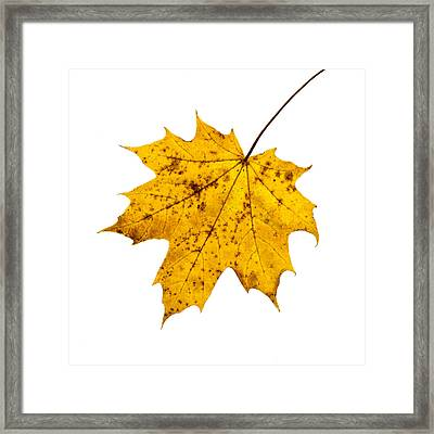 The Last Color 2 - Featured 3 Framed Print by Alexander Senin