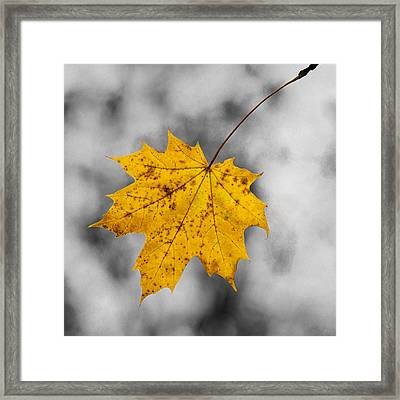 The Last Color - Featured 2 Framed Print by Alexander Senin