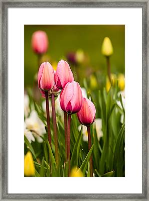 The Last Drops Of Dew Framed Print
