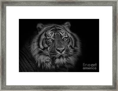 The Last Indonesian Framed Print by Ashley Vincent