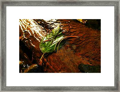 The Last Leaf Framed Print by Jeff Swan