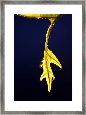 The Last Leaf Framed Print