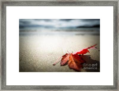 The Last Leaf Framed Print by Susan Cole Kelly Impressions