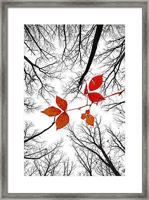 The Last Leaves Of November Framed Print