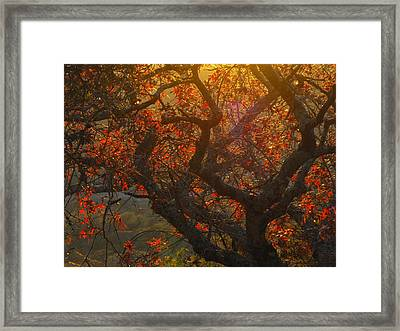 The Last Leaves On The Tree Framed Print by Rebecca Cearley