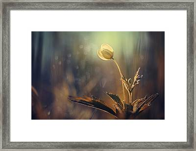 The Last Light Framed Print by Magda  Bognar