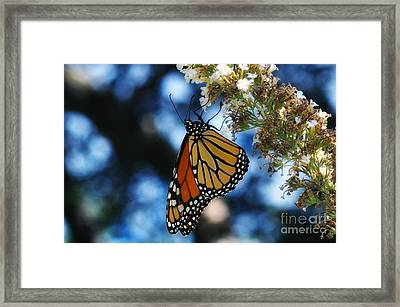 The Last Monarch Of The Season Framed Print