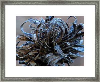 The Last Of The Flower Framed Print by Kimberly Mackowski