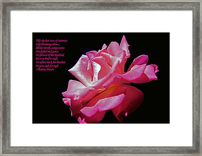 The Last Rose Of Summer Framed Print