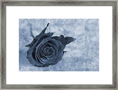 The Last Rose Of Summer Cyanotype Framed Print by John Edwards