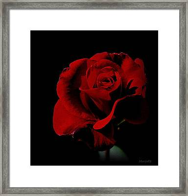 The Last Rose Of  Summer... Framed Print