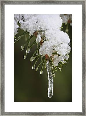 The Last Snow Framed Print by Adam Romanowicz