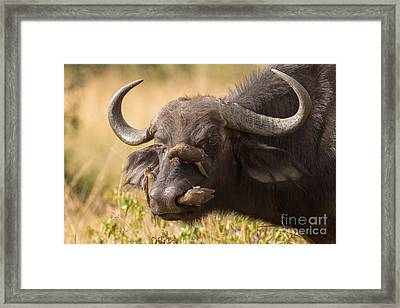 The Last We Saw Of Bob Framed Print by Ashley Vincent