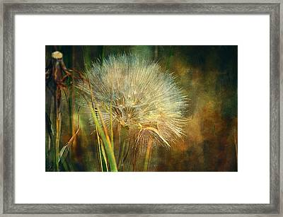 The Last Wish  Framed Print by Maria Angelica Maira
