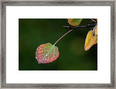The Latter Rain  Framed Print