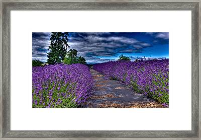 The Lavender Field Framed Print