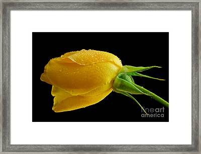 The Lazy One Framed Print by Nick  Boren