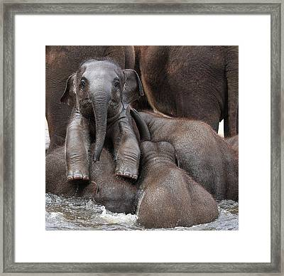 The Leader Of Tomorrow Framed Print by Antje Wenner-braun
