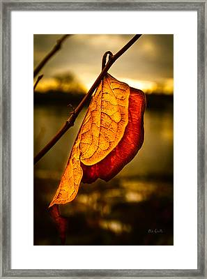 The Leaf Across The River Framed Print by Bob Orsillo