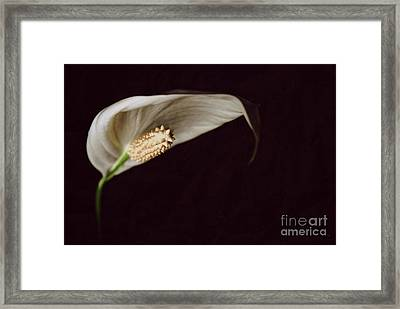 The Leaf Framed Print by Hannes Cmarits