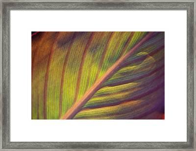 The Leaf No. 2 Framed Print by Richard Cummings