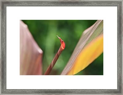 The Leaf No. 3 Framed Print by Richard Cummings