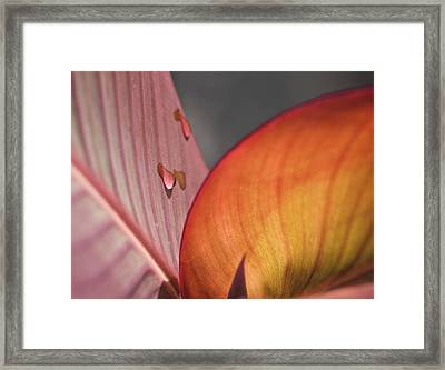 The Leaf No. 4 Framed Print by Richard Cummings