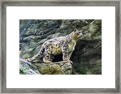 The Leap Framed Print