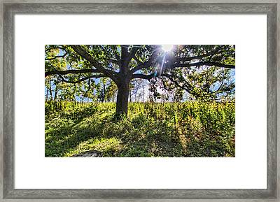 The Learning Tree Framed Print