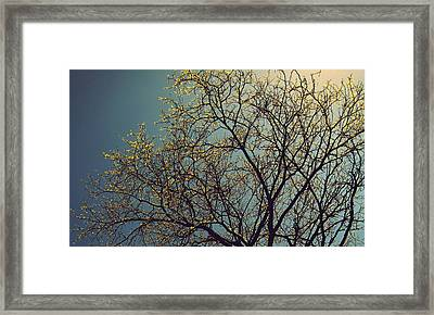 The Leaves Are Returning Framed Print by Jhoy E Meade